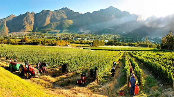 franschhoek_vineyards